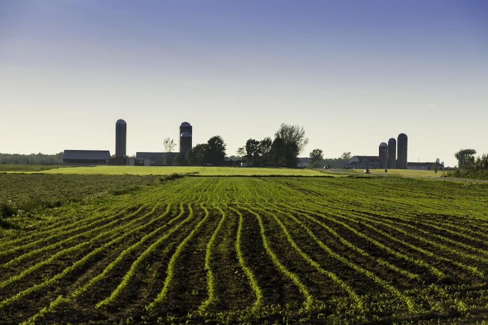 Champs et silos à grain
