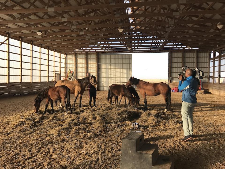 Cinq chevaux dans un enclos