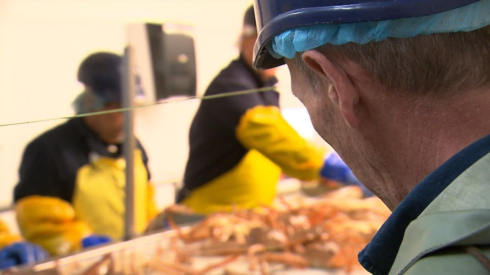 Travailleurs saisonniers dans une usine de transformation du crabe