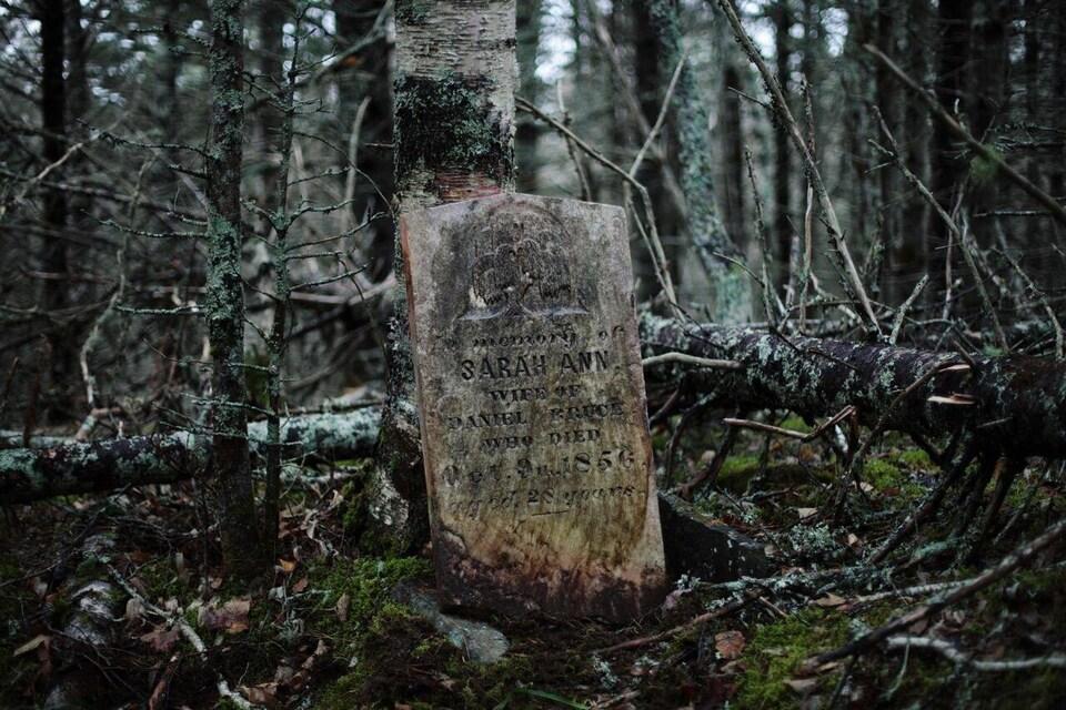 Une pierre tombale de 1856 dans la forêt.