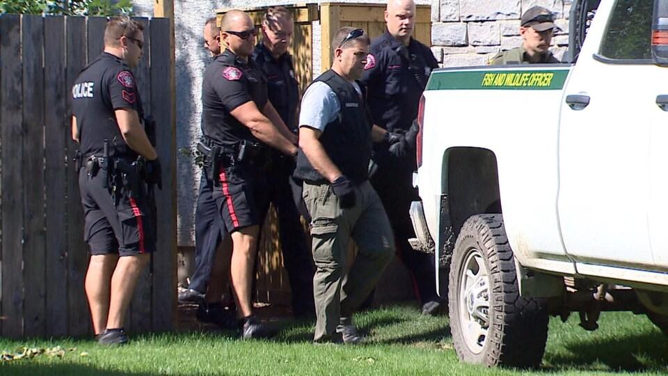 Un cougar mort est transporté par des agents de la faune.