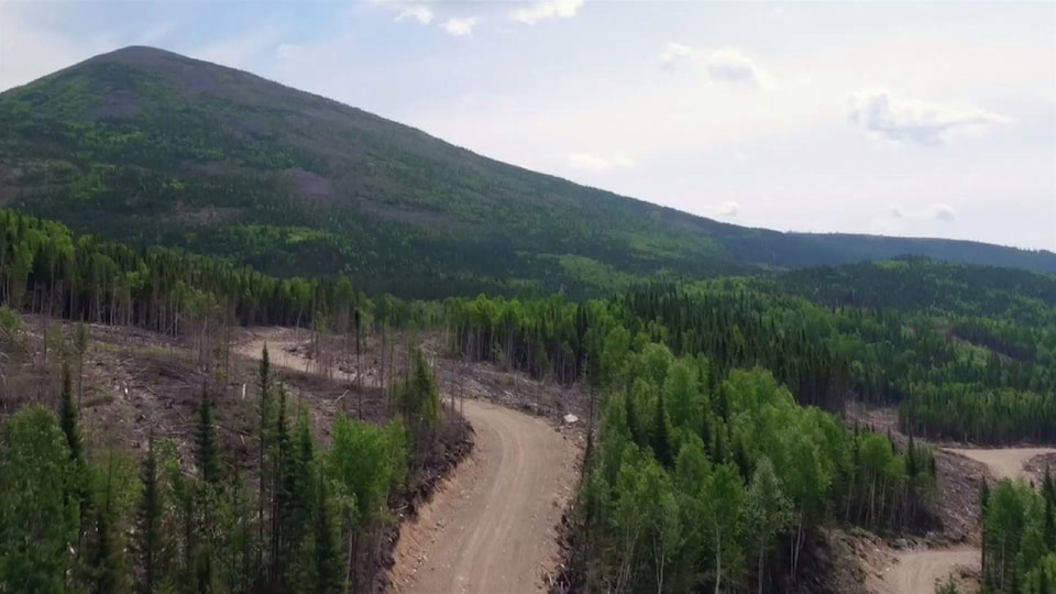 On voit du haut des airs des flancs de montage dénudés, où ont été faites des coupes forestières.