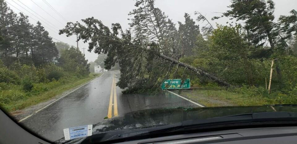Un arbre tombé sur la route.