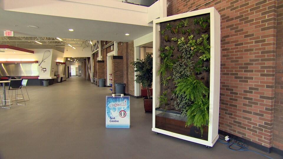 Ce mur végétal permet d'améliorer la qualité de l'air dans l'école ou dans la salle de classe.