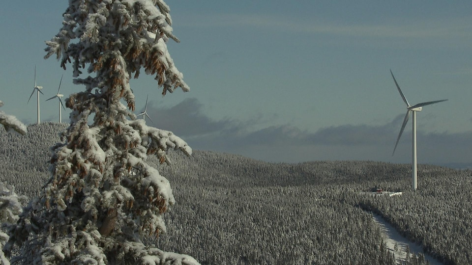 Des éoliennes dans un paysage hivernal en Gaspésie.