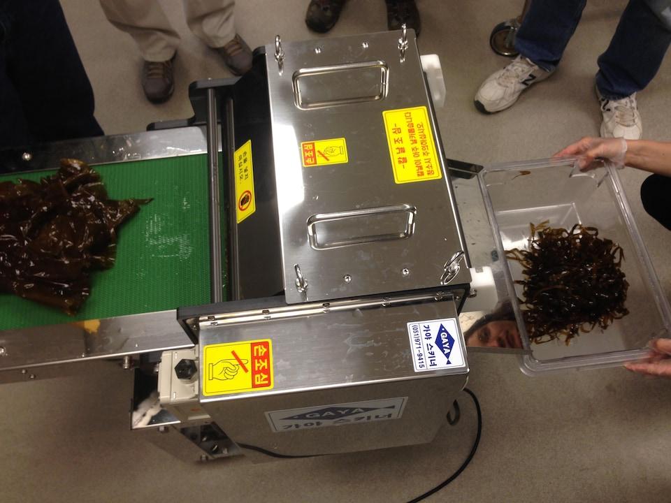 Machine vue de haut. Algues entières à gauche et algues coupées à droite dans un contenant.