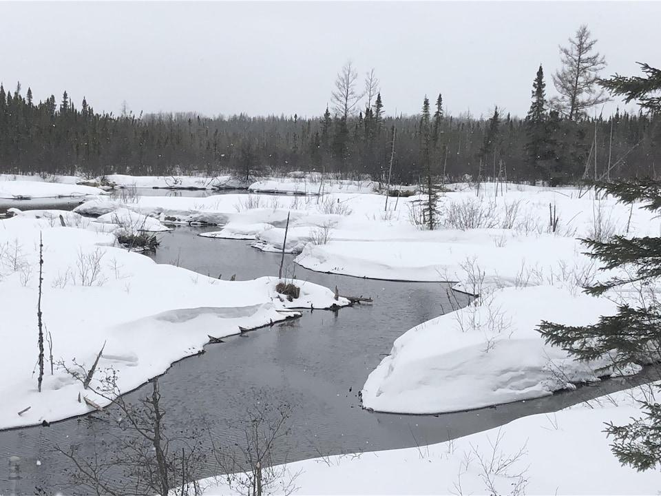 Vue sur un ruisseau près d'Amos entouré de neige et de sapins. De petits flocons tombent du ciel.