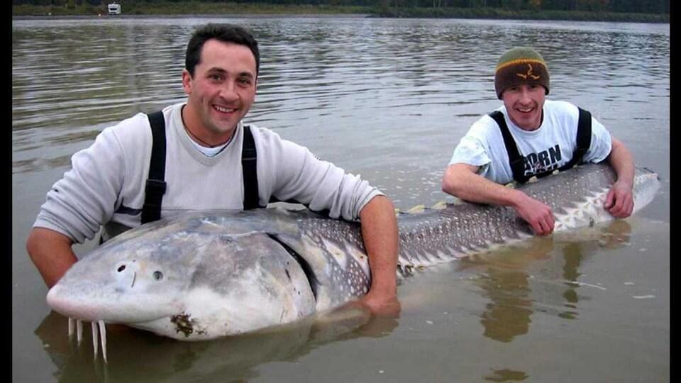 Deux hommes tiennent un immense poisson dans l'eau. Le poisson fait environ la taille des deux mis ensemble.