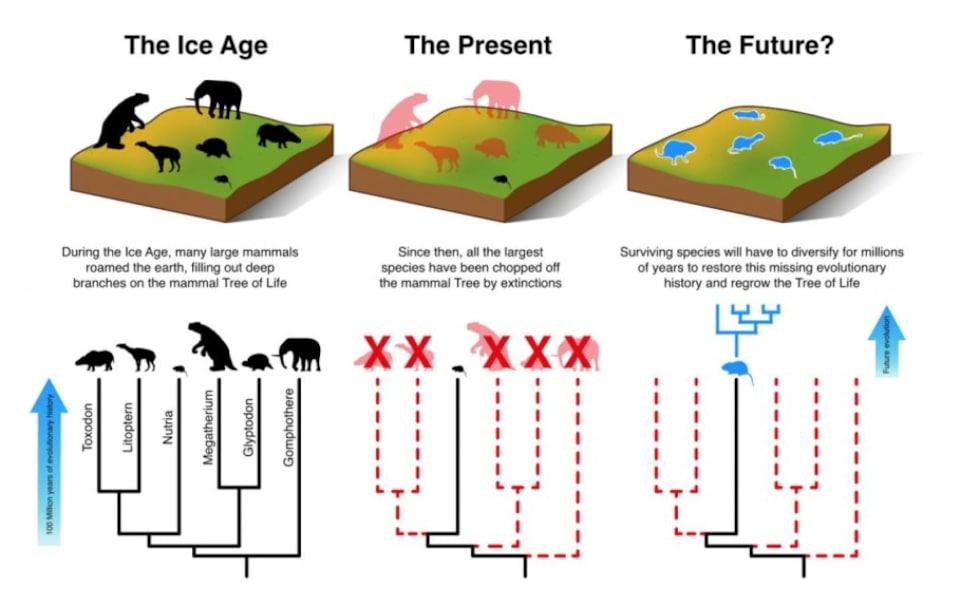 Illustration de la façon dont les petits mammifères devront évoluer et se diversifier au cours des 3 à 5 millions d'années à venir pour compenser la perte des grands mammifères.