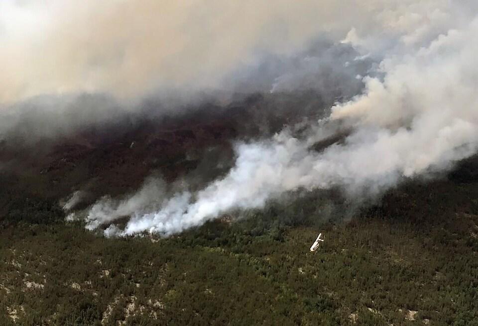 Une forêt en feu dont se dégage beaucoup de fumée.