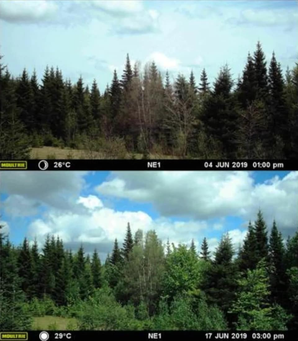 On peut voir ici deux photos du même secteur prises à un intervalle de 13 jours en juin dernier.
