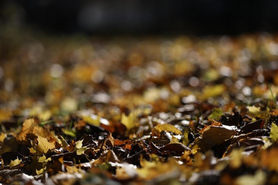 Des feuilles mortes en automne.