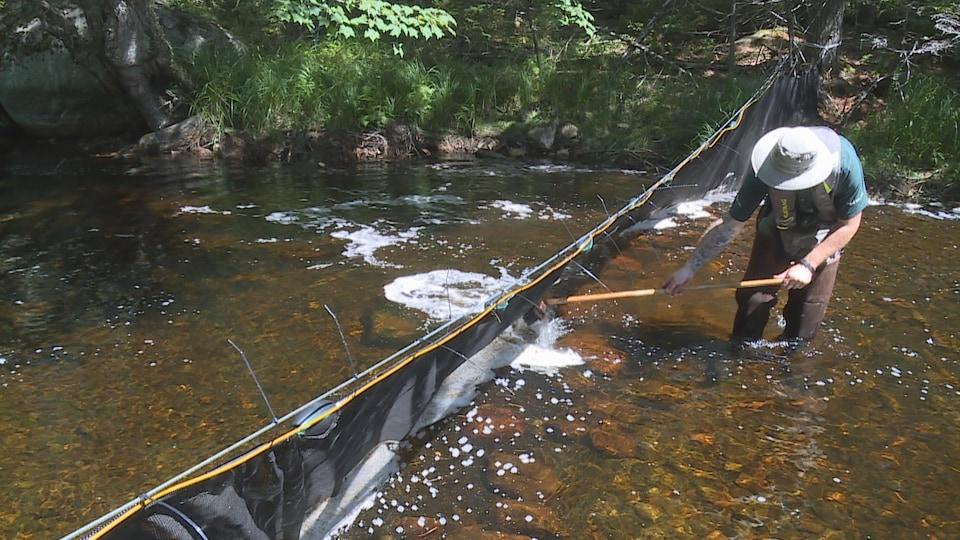Filet installé sur un ruisseau.