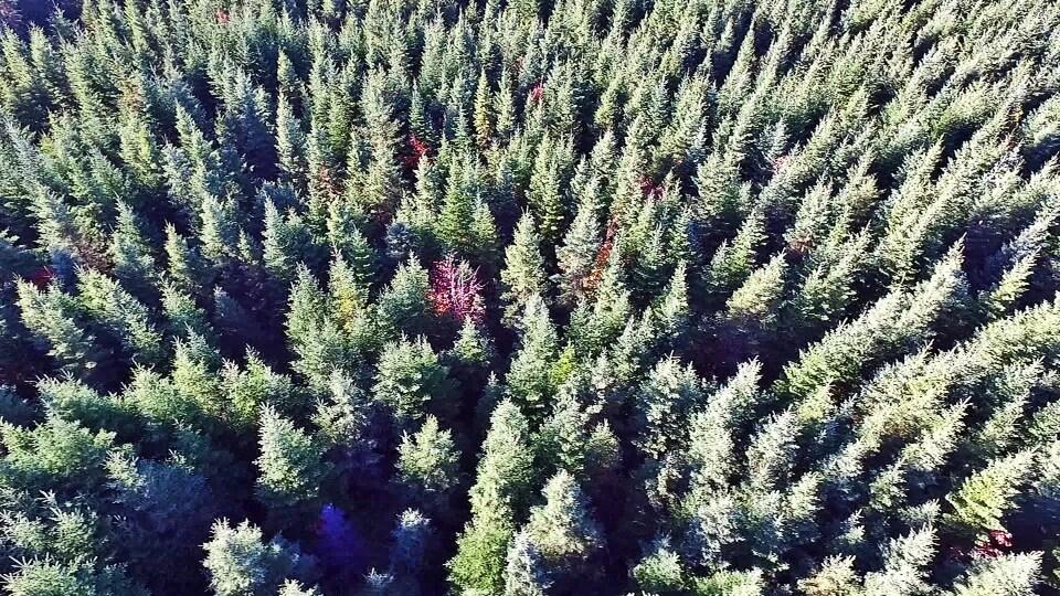 Vue aérienne d'une forêt au Nouveau-Brunswick