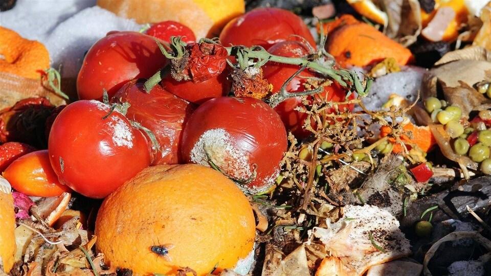 Des aliments dans un compost.