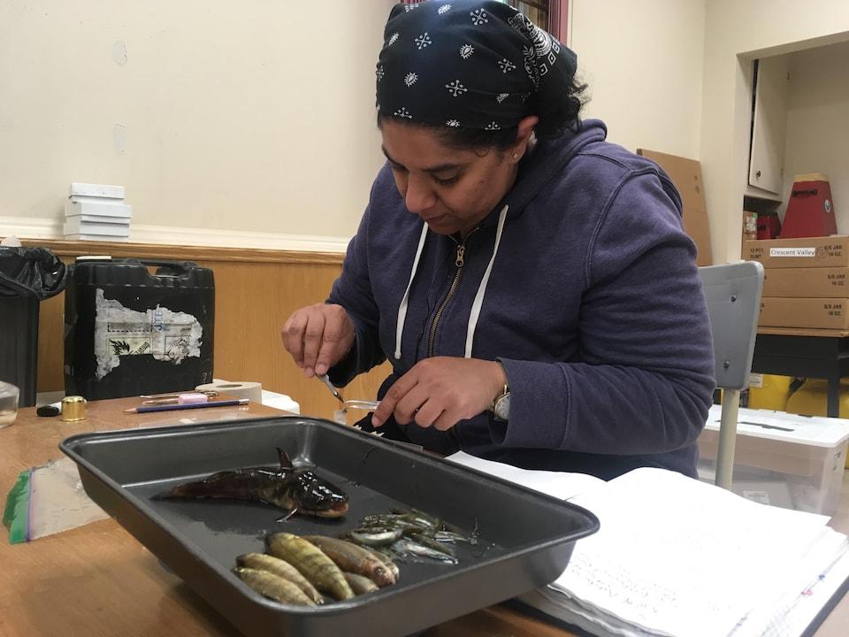 La chercheuse Gayathri Sreedharan prend des échantillons de tissus d'une nouvelle espèce de poisson trouvé dans le lac Spednic au Nouveau-Brunswick à l'occasion du projet BiotaNB.