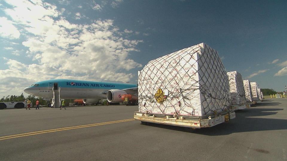 Des palettes de boîtes de homard destinées à l'exportation sont en train d'être chargées dans un aéroport canadien.