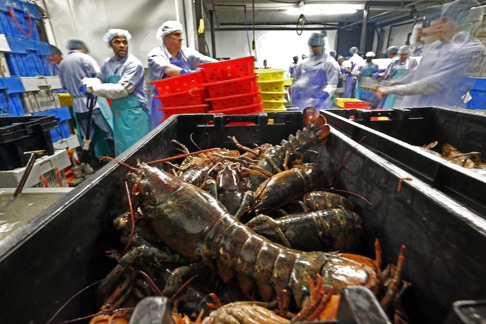 Une usine de transformation du homard