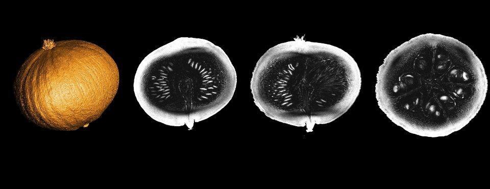 Images d'un potimarron révélées par l'appareil IRM le plus puissant au monde.