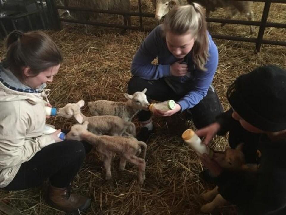 On voit trois adolescents assis en cercle dans la paille autour de jeunes agnelets. Ils les nourrissent à l'aide de biberons.