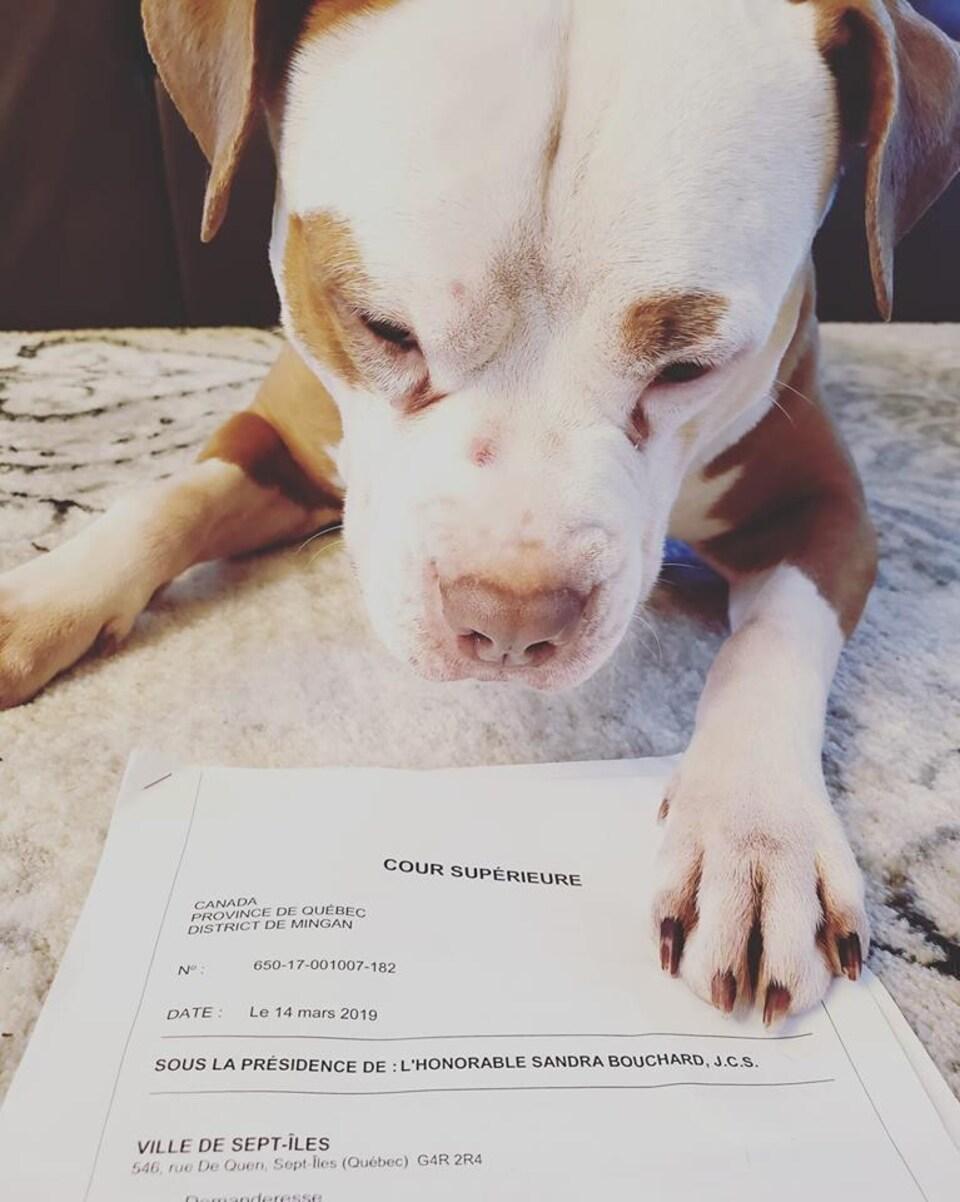 Une patte de chien sur un jugement de Cour supérieure.