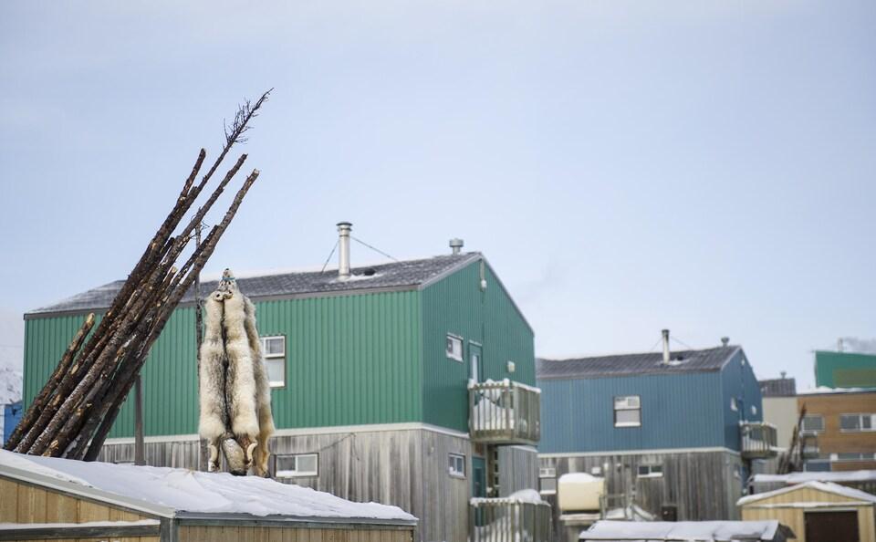 Fourrures de loups dans le village de Kangiqsualujjuaq