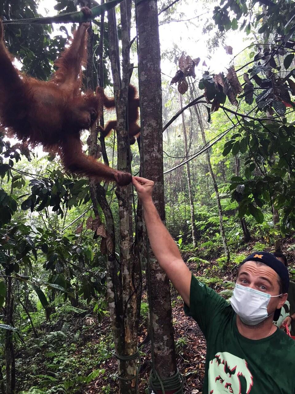Leonardo DiCaprio serre la main d'un orang-outang en Indonésie