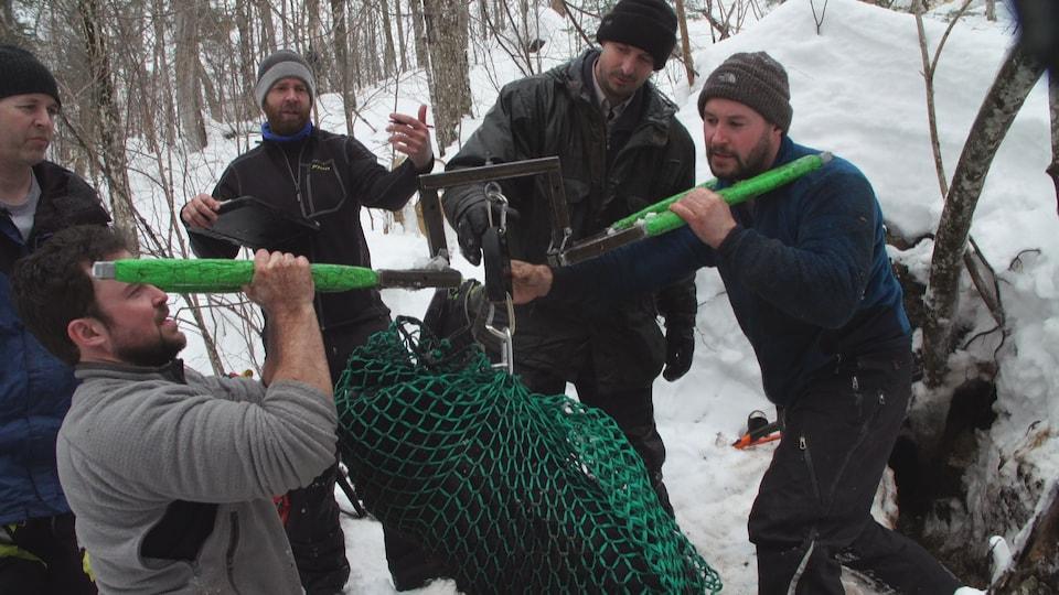 Des chercheurs pèsent un ours dans la forêt en hiver à l'aide d'un filet.