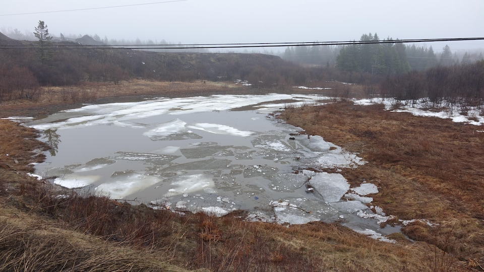 Des plaques de glace recouvrent l'eau de la mare