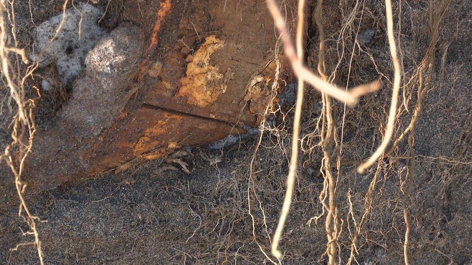 Des traces des anciennes forges découvertes à Moisie