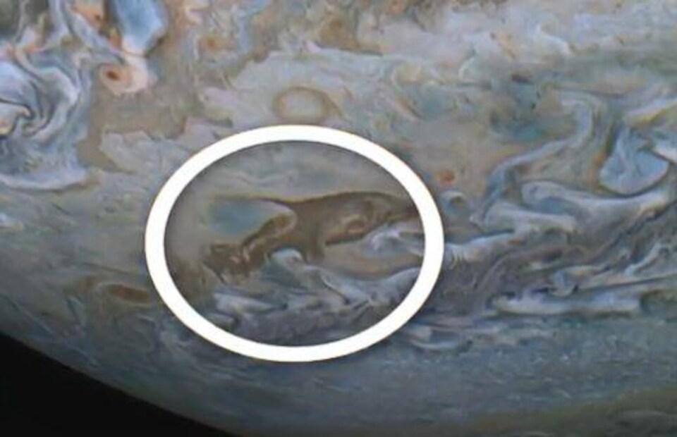 Un dauphin apparaît dans les nuages de Jupiter.