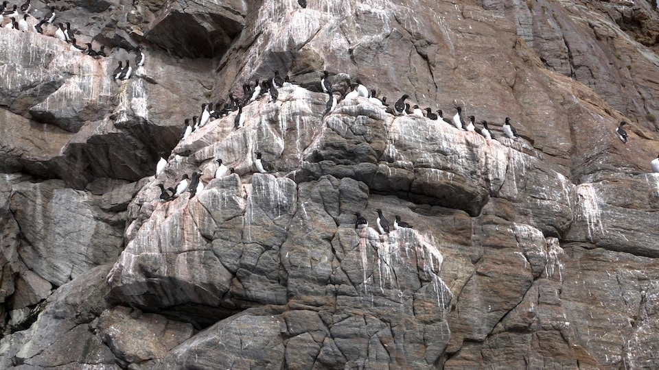 Des oiseaux sur l'île de Hantzsch
