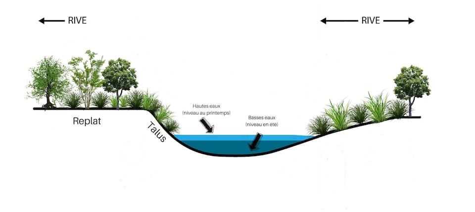 Un schéma montre une rivière bordée d'arbustes et d'arbres.