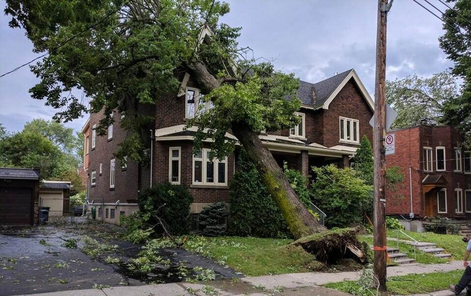 Un arbre s'abat sur une maison dans Côte-des-Neiges–Notre-Dame-de-Grâce après le passage des orages violents.
