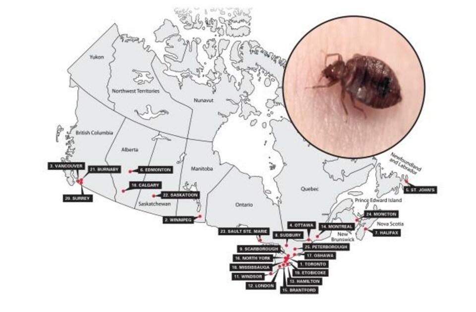 Une carte réalisée par Orkin Canada, qui a classé 25 villes canadiennes touchées par les punaises de lit.