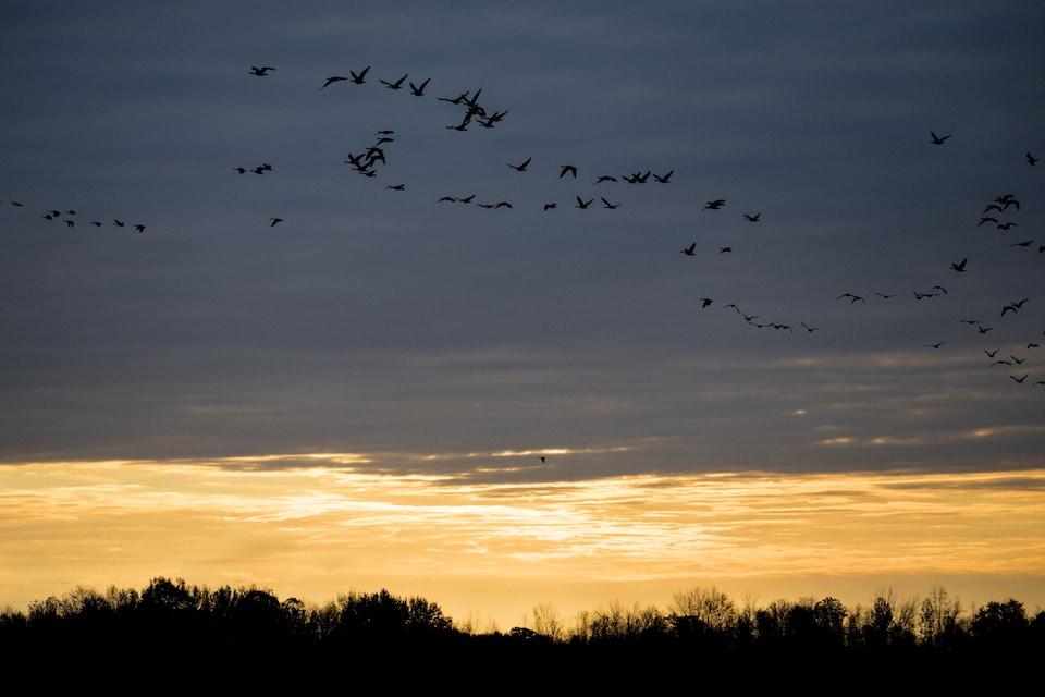 Des oiseaux volent dans le soleil levant.