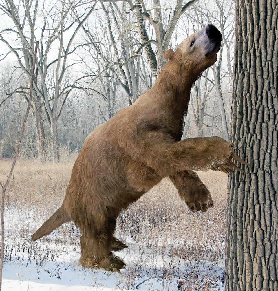 Représentation artistique d'un paresseux géant.
