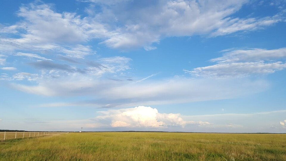 un espace vert de prairie, en plein été, sur fond de ciel bleu.