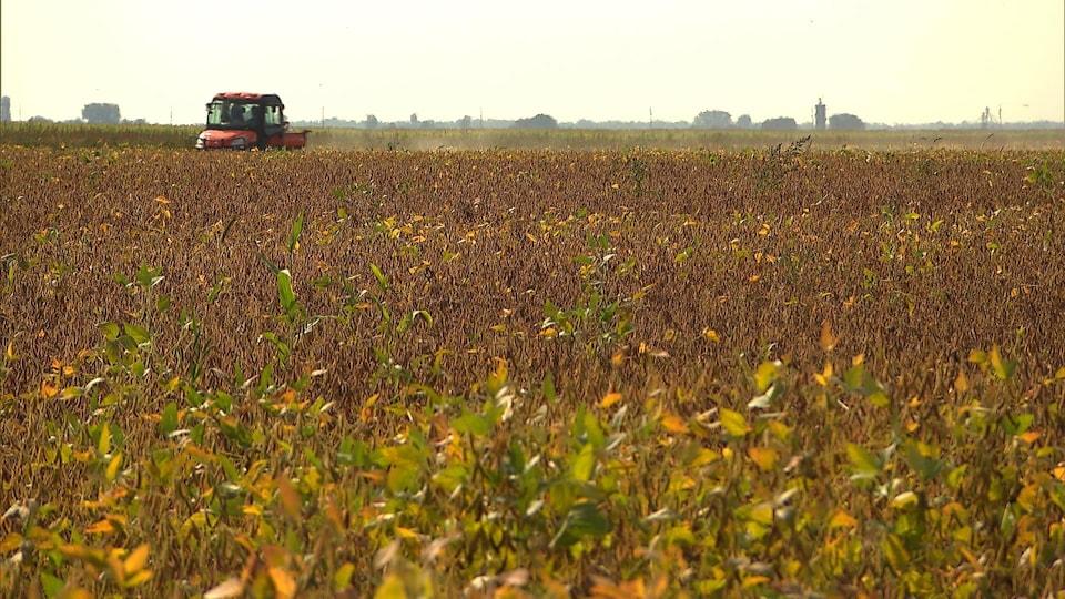 Un camion rouge se déplace à travers un champ doré qui s'étend à perte de vue.