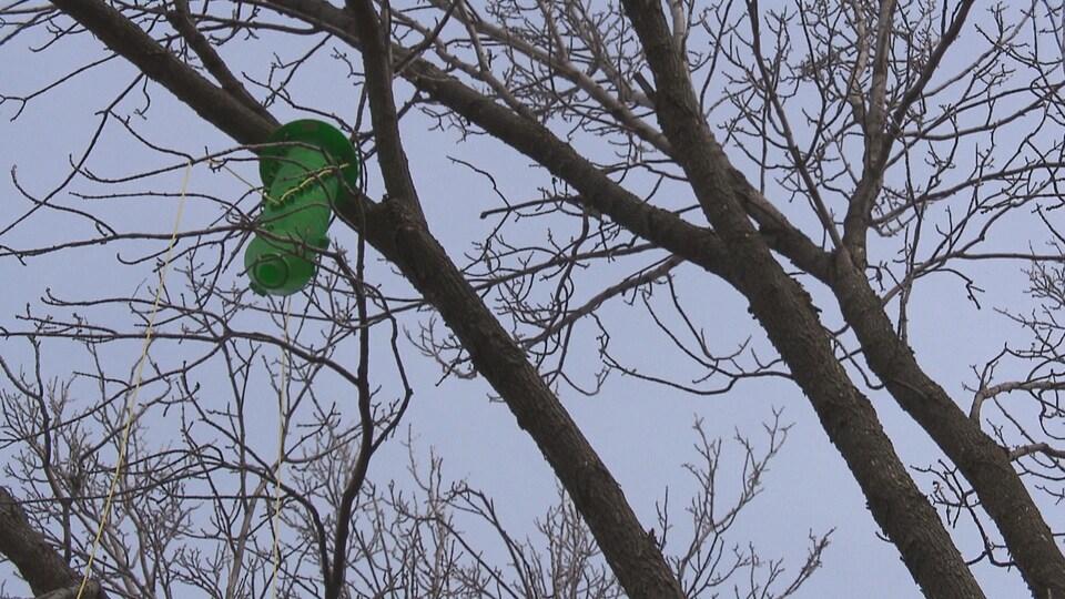 Piège dans les branches d'un arbre