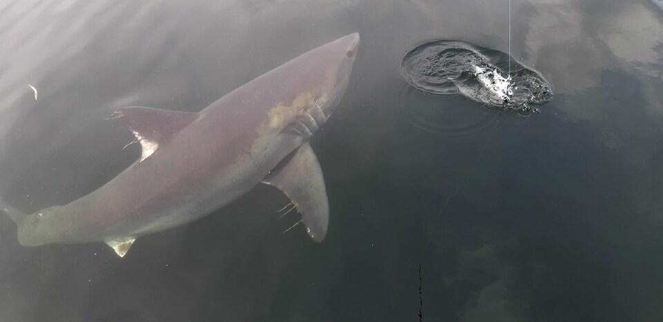 Un bien gros poisson lorsqu'on s'attend à voir un maquereau.