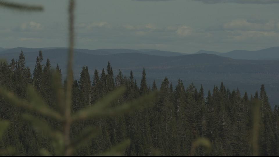 Vue sur les monts Chic-Chocs à partir de la réserve Matane