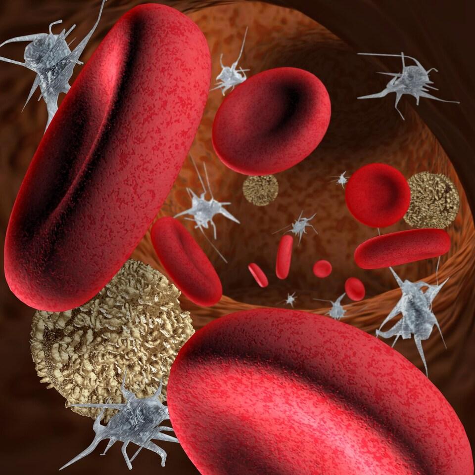 Des globules rouges, des globules blancs et des plaquettes flottent dans une veine.
