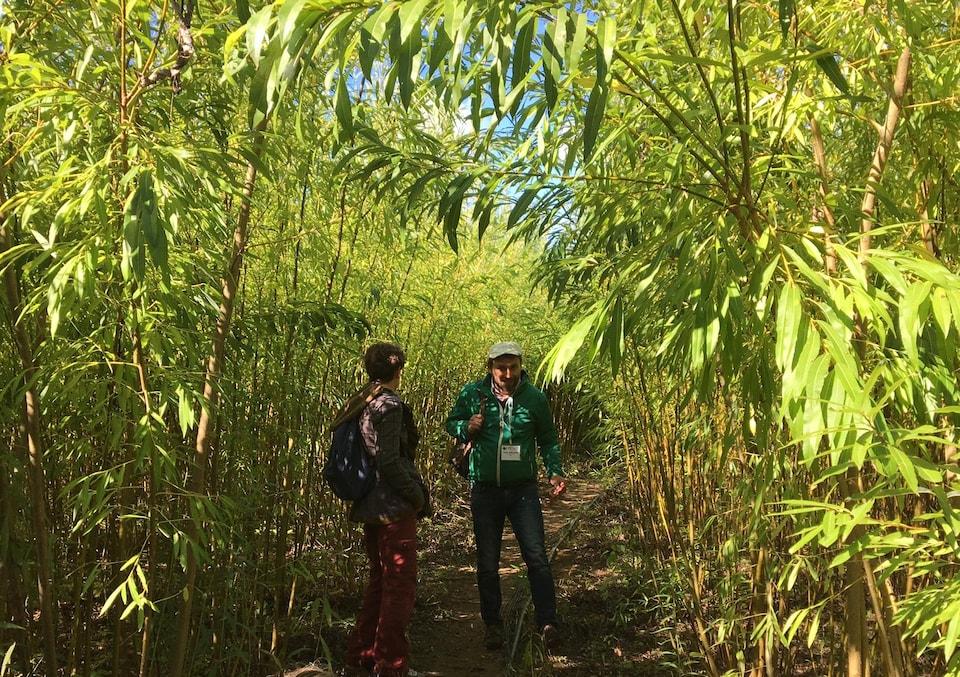 On voit deux personnes marchant dans les parcelles de saules nourris avec des eaux usées à Saint-Roch-de-l'Achigan.