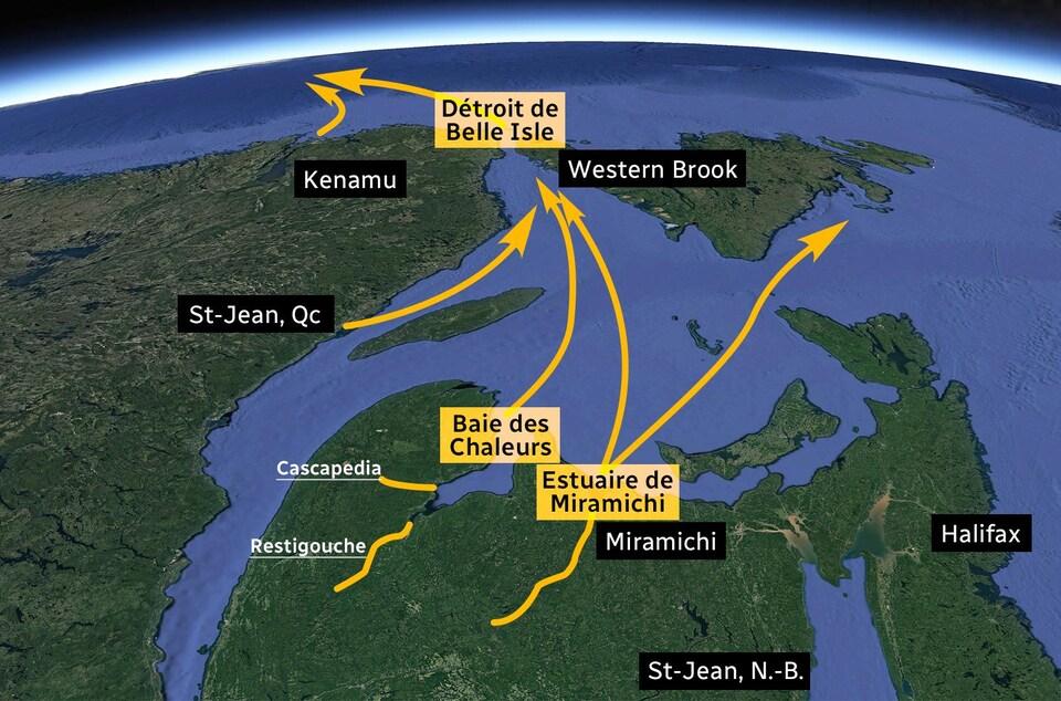 Une carte du golfe du Saint-Laurent indiquant la convergence des saumons dans le détroit de Belle Isle.
