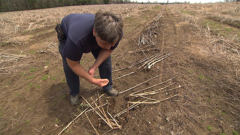 Un agriculteur montre un champ dévasté par la sécheresse.