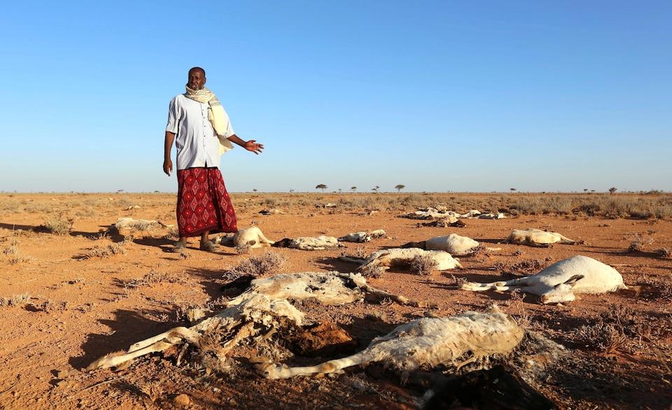 Un homme observe les carcasses de ses chèvres, près de la ville de Dahar, dans le nord-est de la Somalie, en décembre 2016.