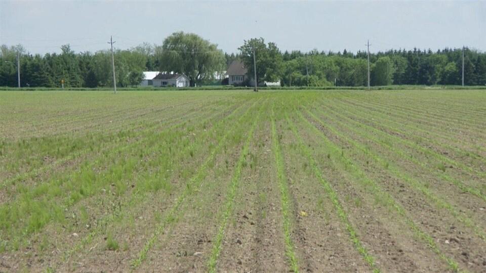 Les terres agricoles du N.-B. peuvent bénéficier d'un programme de report de l'impôt foncier.