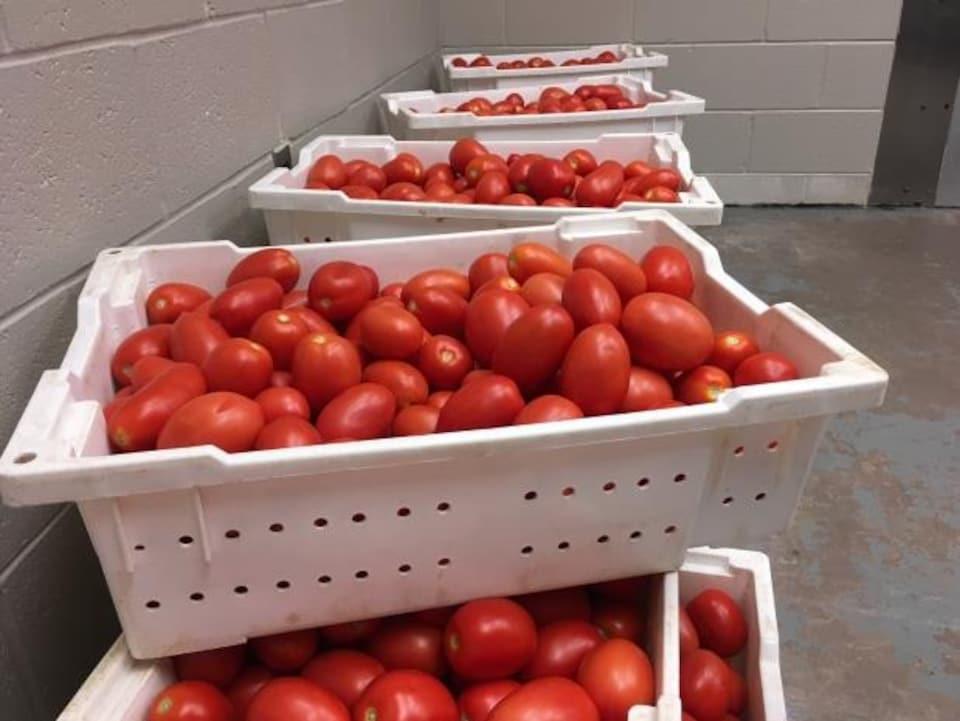 Les écoles de la province pourraient engloutir jusqu'à 50 000 livres de tomates selon le chef Patrick Mills.