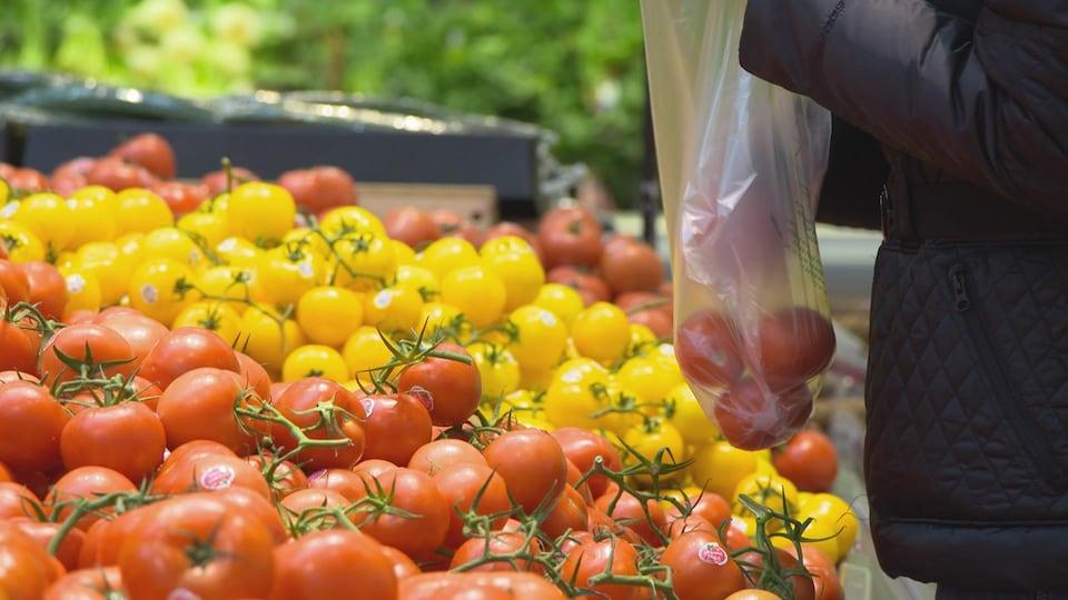 Un consommateur place des tomates dans un sac en plastique.